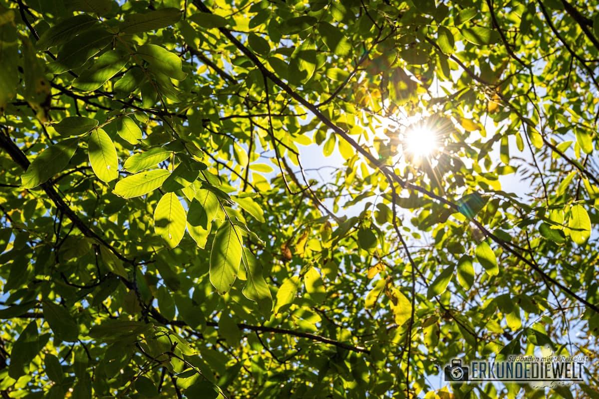 Fotowalk #8 - Licht & Schatten - Sonne