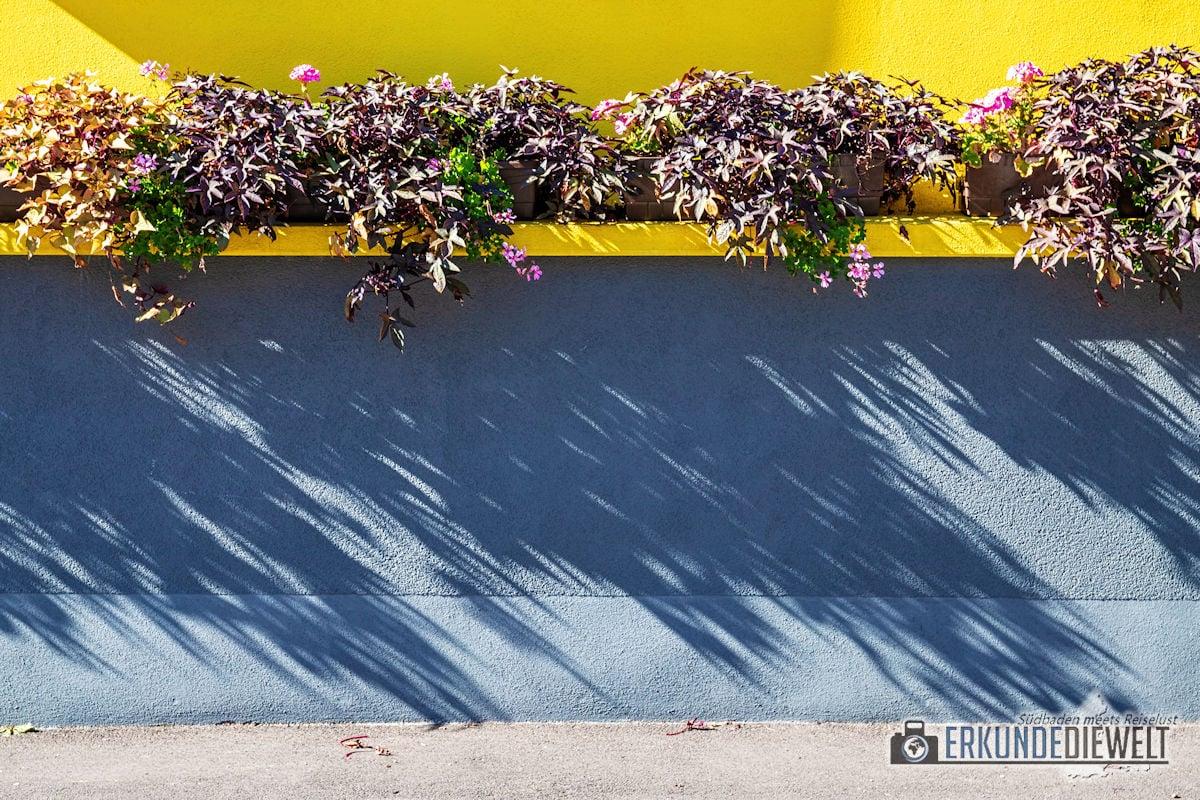Fotowalk #8 - Licht & Schatten - Schattenpflanzen
