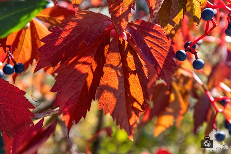 Fotowalk #8 - Licht & Schatten - Herbstblatt