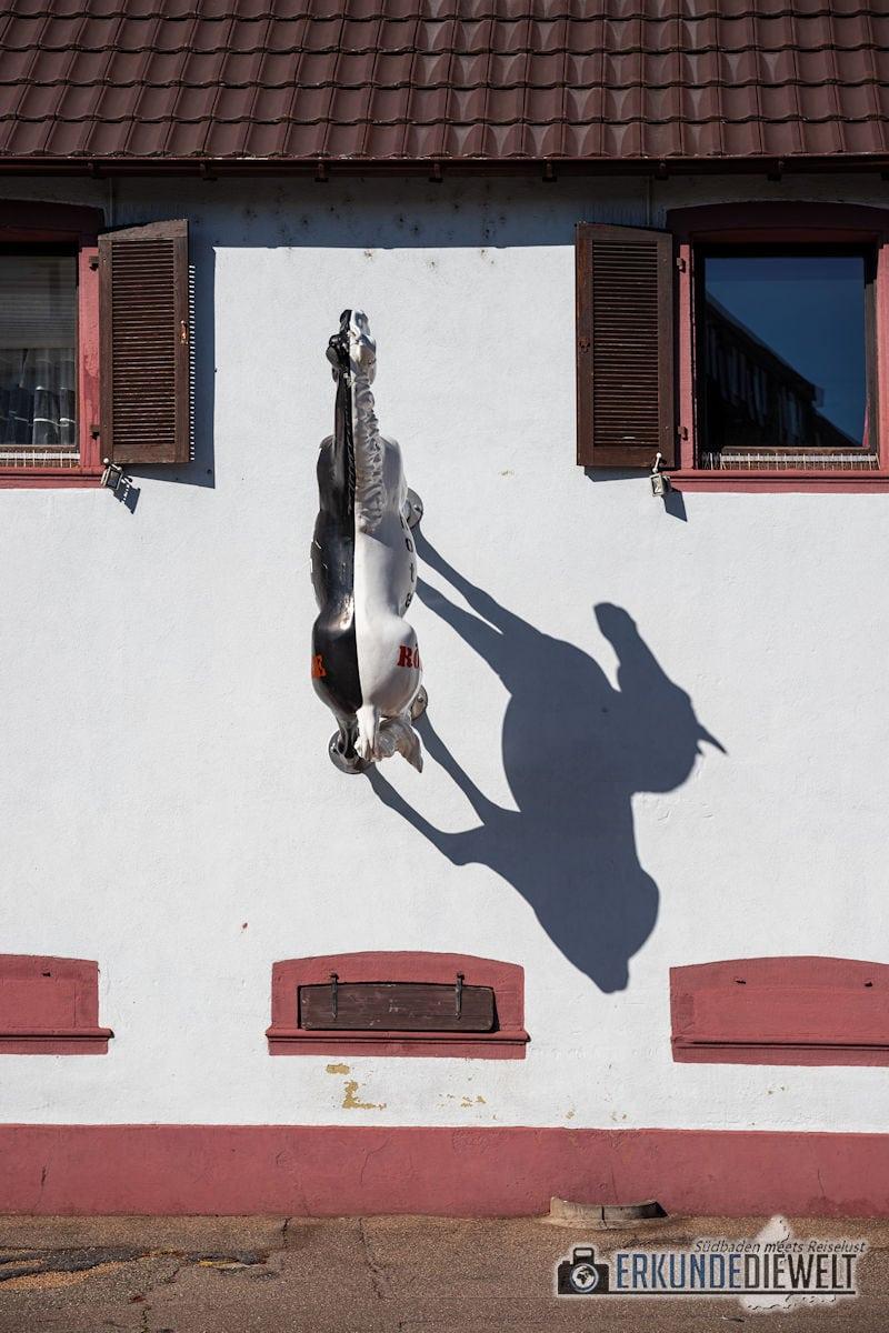 Fotowalk #8 - Licht & Schatten - Pferd