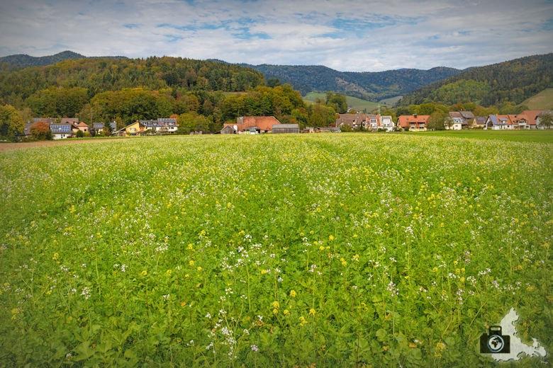 Wanderung Dreisamtal - Kapellenweg Stegen - Wiese