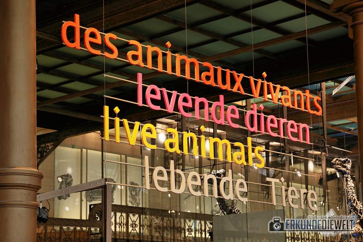 Naturkundemuseum, Brüssel, Belgien
