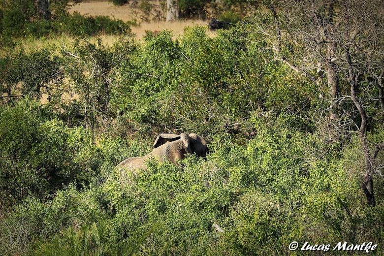 Lucas entdeckt einen Elefant im Busch