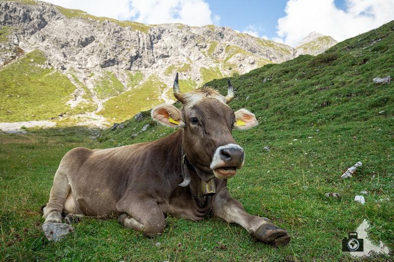 Fotoparade 2-2018 - die schönsten Bilder aus Österreich - Kategorie Tierisch