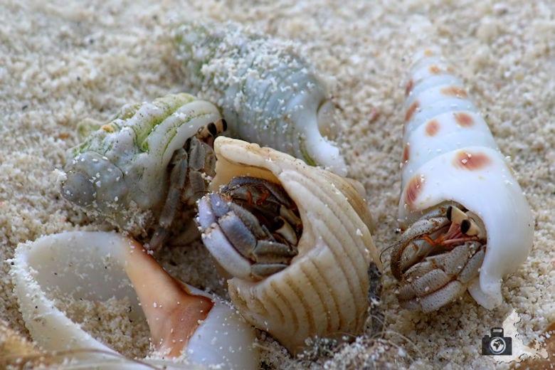 Tipps zum Fotografieren an Strand & Küste - Blick für Details