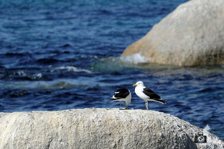 Tipps zum Fotografieren an Strand & Küste - Möwen fotografieren