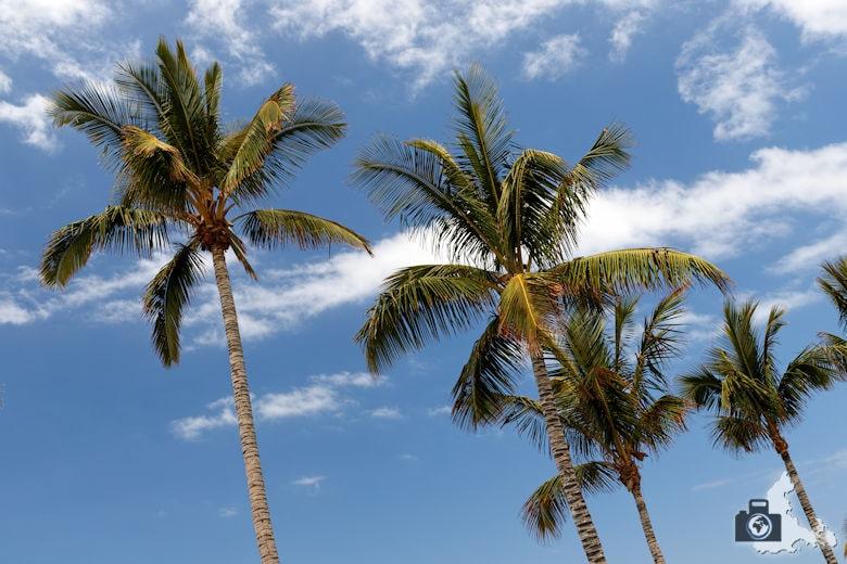 Tipps zum Fotografieren an Strand & Küste - Palmen