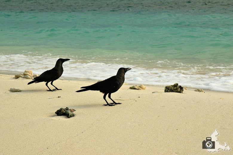 Tipps zum Fotografieren an Strand & Küste - Tiere am Strand