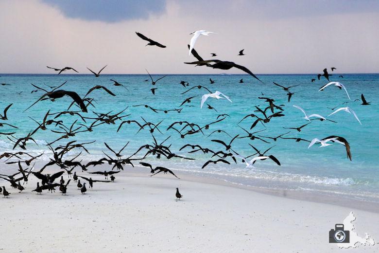 Tipps zum Fotografieren an Strand & Küste - Vögel am Strand