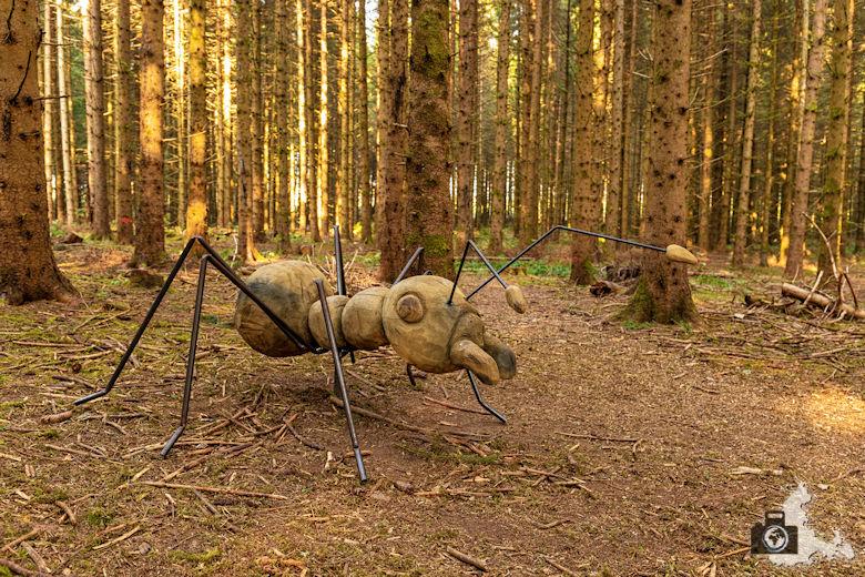 Schwarzwälder Genießerpfad - Rötenbachschlucht - Ameise