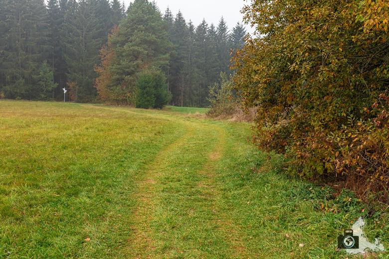 Schwarzwälder Genießerpfad - Rötenbachschlucht - Wiese