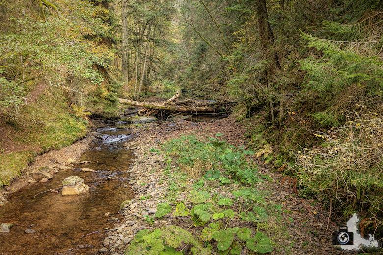Schwarzwälder Genießerpfad - Rötenbachschlucht - Bach
