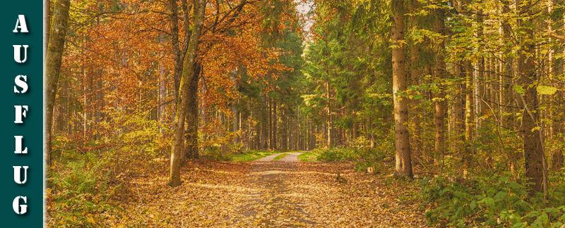 Schwarzwälder Genießerpfad - Rötenbachschlucht - Herbstwanderung