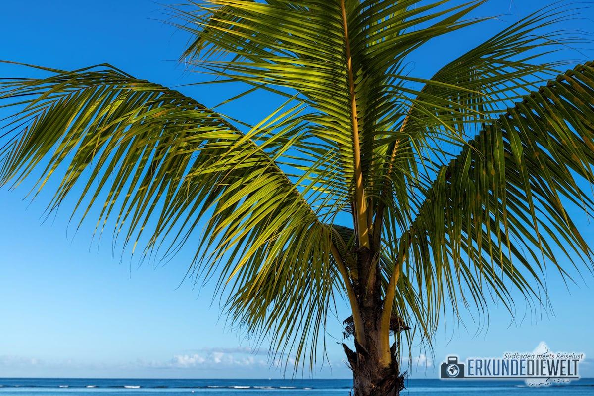 Palme am Strand, Mauritius