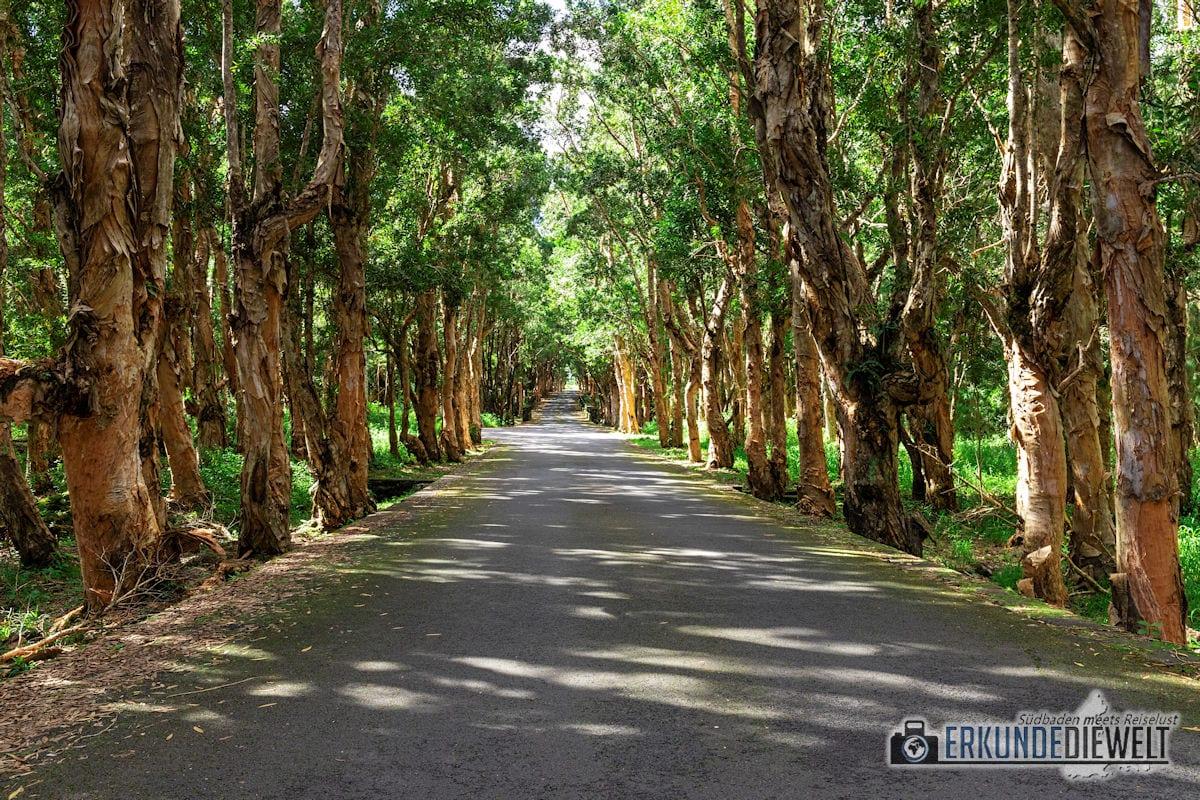 Alexandra Falls, Mauritius