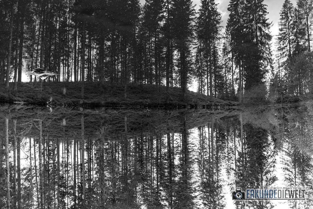 Wanderung, Säbelthomaweg, Hinterzarten, Schwarzwald