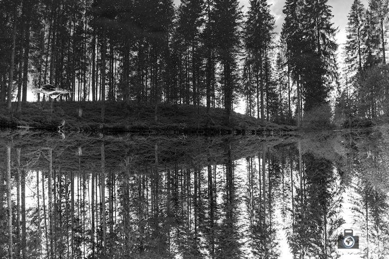 Schwarzwälder Genießerpfad - Säbelthomaweg Hinterzarten - Kesslerhofweiher