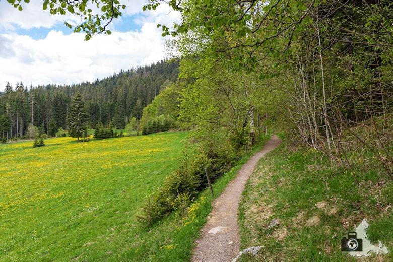 Schwarzwälder Genießerpfad - Säbelthomaweg Hinterzarten - Wanderweg