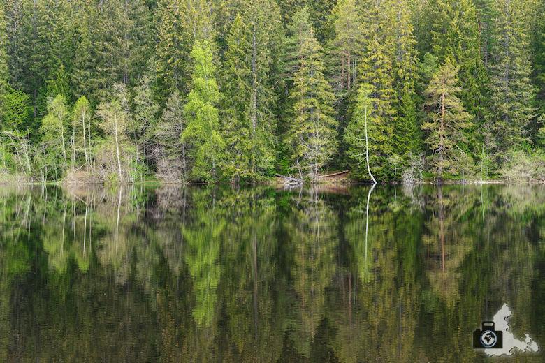 Schwarzwälder Genießerpfad - Säbelthomaweg Hinterzarten - Mathisleweiher