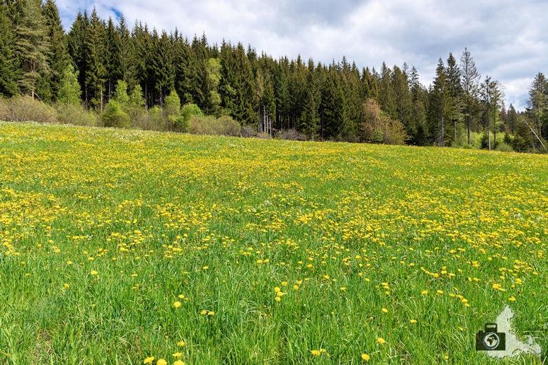 Schwarzwälder Genießerpfad - Säbelthomaweg Hinterzarten