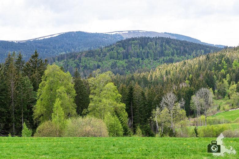 Schwarzwälder Genießerpfad - Säbelthomaweg Hinterzarten - Feldberg