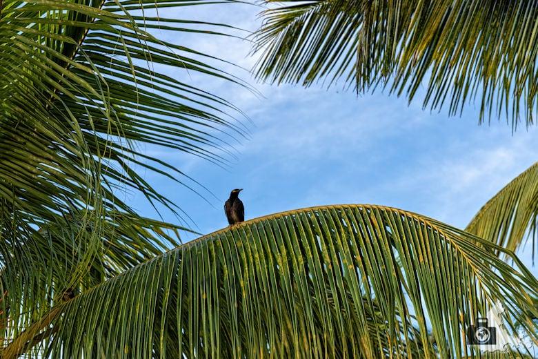 Palmen am Strand von Mauritius