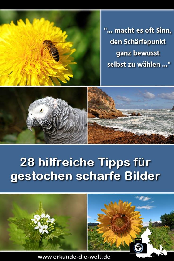 Fotografie Tipps: Scharfe Bilder und perfekte Schaerfentiefe