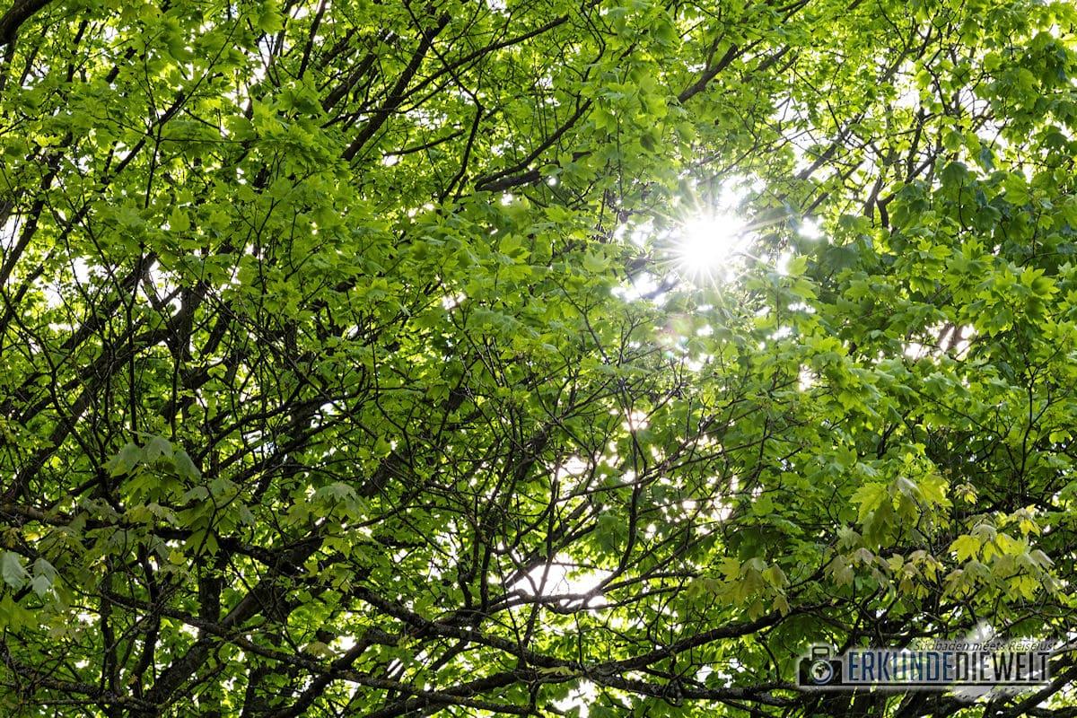 Canon EOS RP Testbild