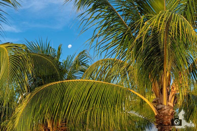 Fotowalk #9 - Am Strand von Mauritius - Mond
