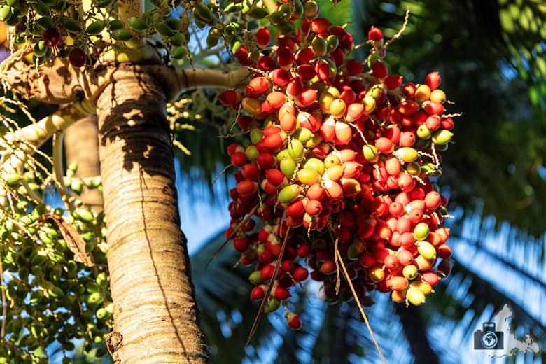 Fotowalk #9 - Am Strand von Mauritius - Früchte