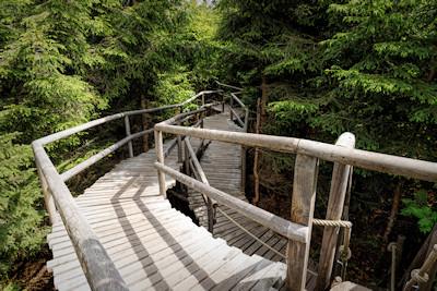 Lotharpfad & Nationalpark Schwarzwald Bilder