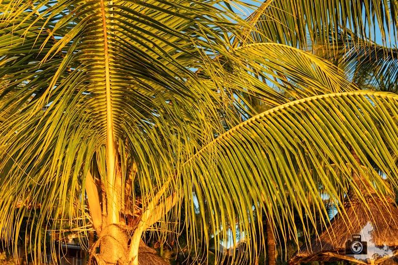 Palme in der Abendsonne