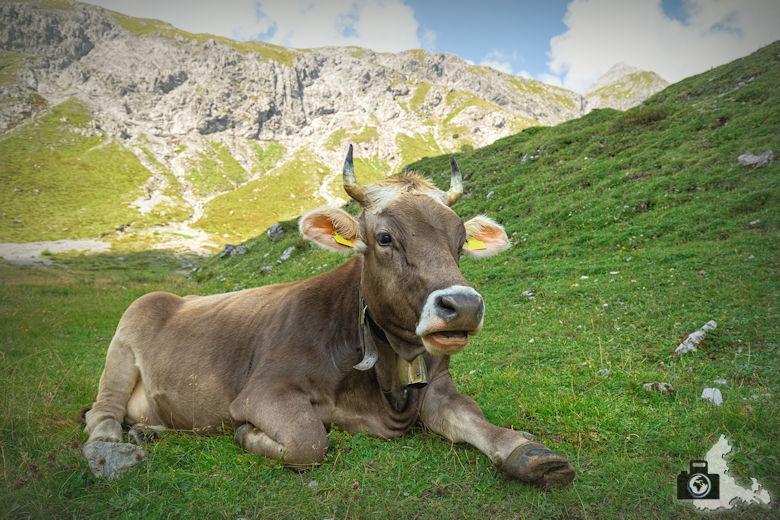 Kuh, Lünersee, Brandnertal, Österreich