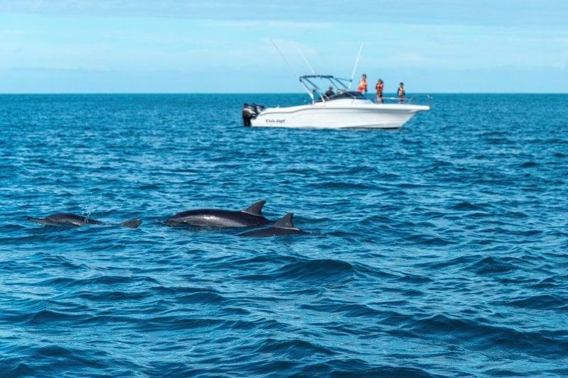 Schwimmen mit Delfinen auf Mauritius