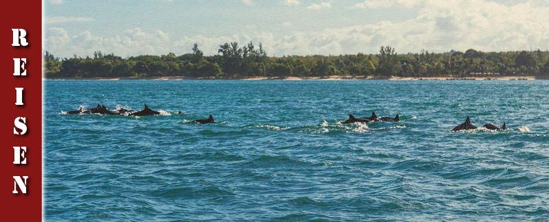 Schwimmen mit Delfinen & Bootstour vor Mauritius