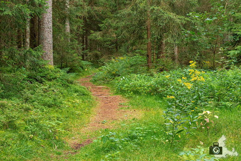 Waldweg, Schwarzwälder Genießerpfad Heilklima-Steig Schönwald