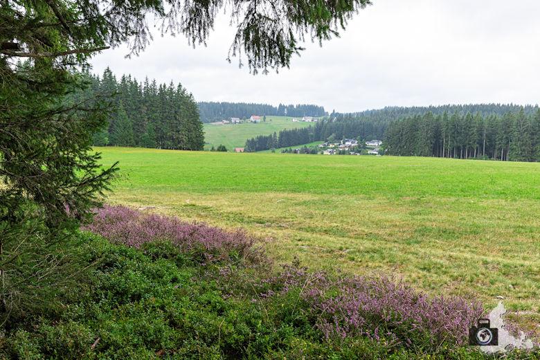Wiese, Schwarzwälder Genießerpfad Heilklima-Steig Schönwald
