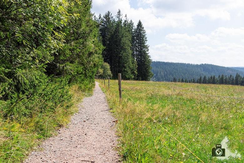 Weide, Schwarzwälder Genießerpfad Heilklima-Steig Schönwald