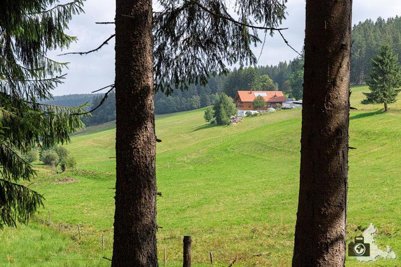 Reinerweiher, Schwarzwälder Genießerpfad Heilklima-Steig Schönwald