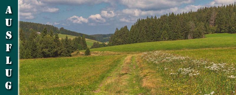 Schwarzwälder Genießerpfad Heilklima-Steig Schönwald