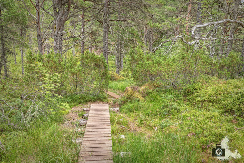 Jendemsfjellet Wanderung - Wanderweg