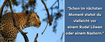 Tierfotografie - Wildtiere auf Safari in Afrika fotografieren – 24 Tipps