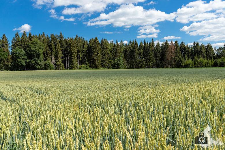 Wanderung Genießerpfad Himmelberg Runde - Getreidefeld