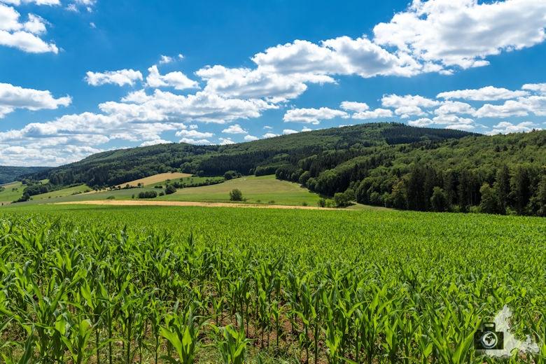 Wanderung Genießerpfad Himmelberg Runde - Maisfeld