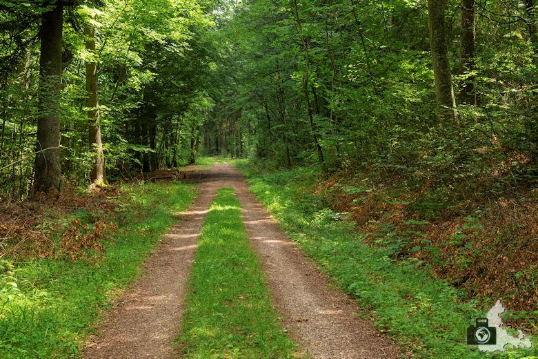 Wanderung Genießerpfad Himmelberg Runde - Waldweg