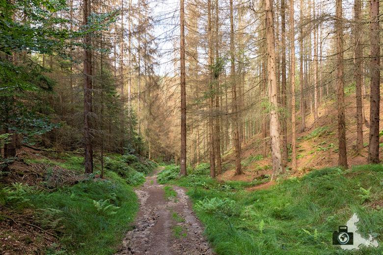 Elbsandsteingebirge - Wanderung zum Großen Pohlhorn