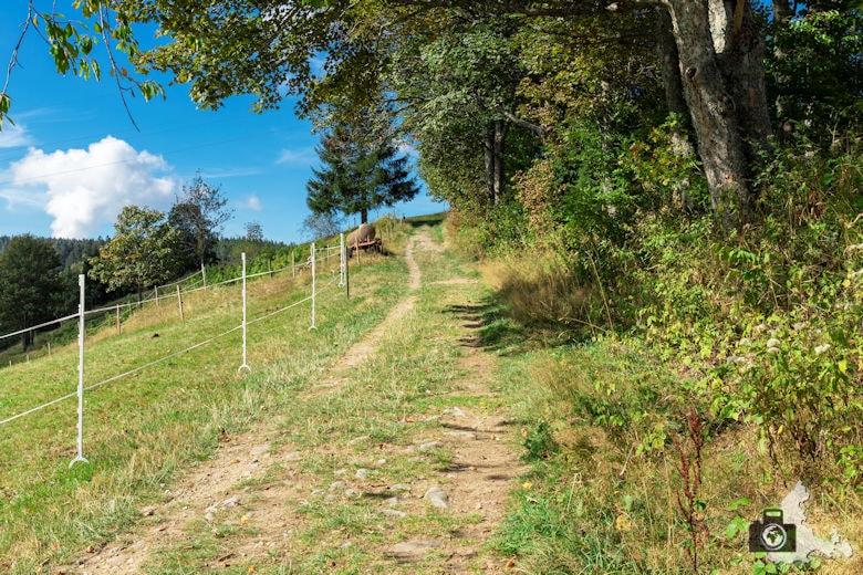 Schwarzwälder Genießerpfad - Lebküchlerweg - Wanderweg