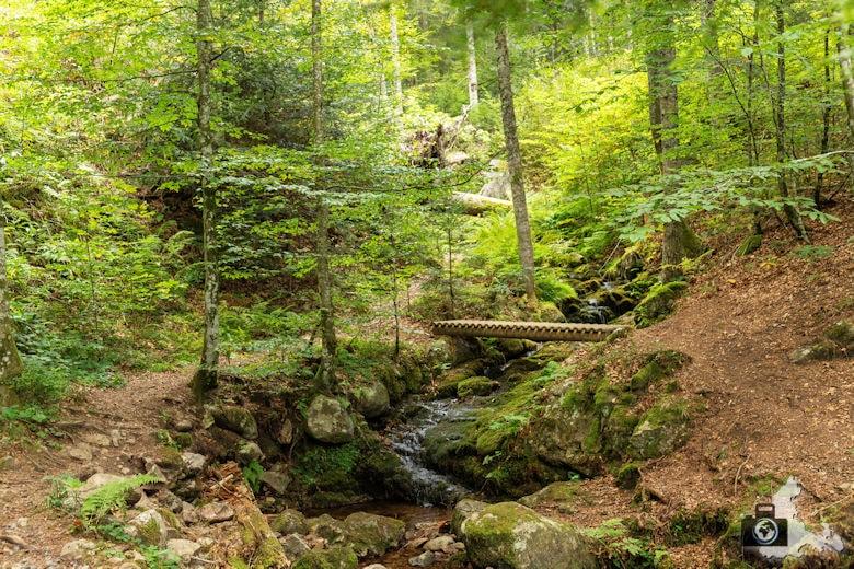 Schwarzwälder Genießerpfad - Lebküchlerweg - Bach