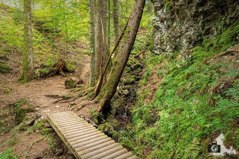 Schwarzwälder Genießerpfad - Lebküchlerweg - Steg
