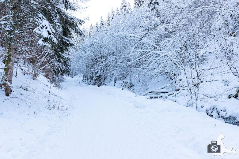 Fotowalk - Winterspaziergang im Münstertal - Waldweg